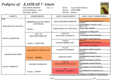 Pedigree of Kasirah V Arneis