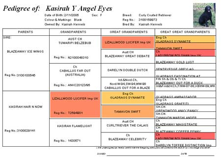 Pedigree of Kasirah Y Angel Eyes