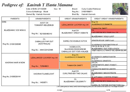 Pedigree of Kasirah Y Hasta Manana